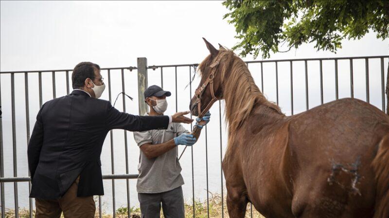 İBB'den Adalar'ın atlarıyla ilgili açıklama