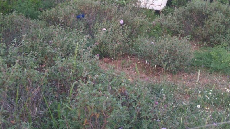 Yalova'da çalınan araç Bursa'da bulundu