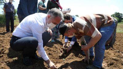 İnegöl'de ilk ekinezya ekimi gerçekleşti