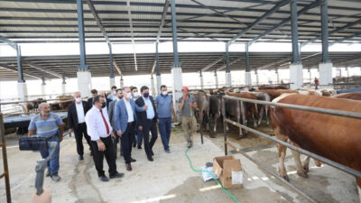 İnegöl'de yeni hayvan pazarında kurbanlıklar satışta