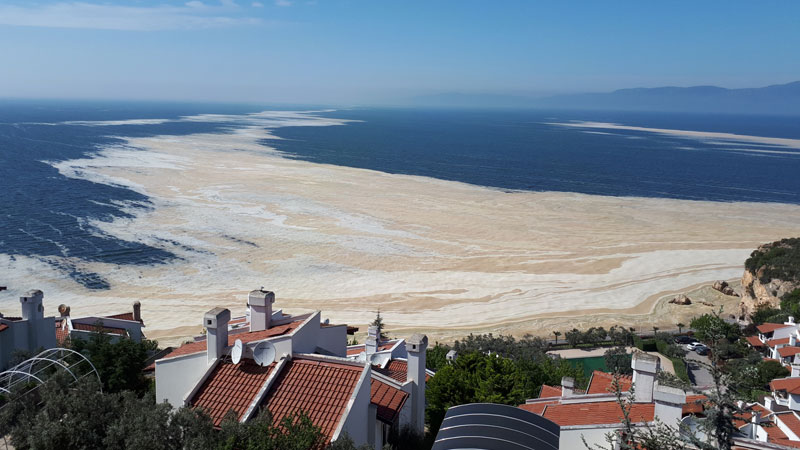 Marmara Denizi'ndeki çevre felaketi ekonomi için fırsat olabilir