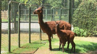 Bursa Hayvanat Bahçesi'ne yeni üyeler