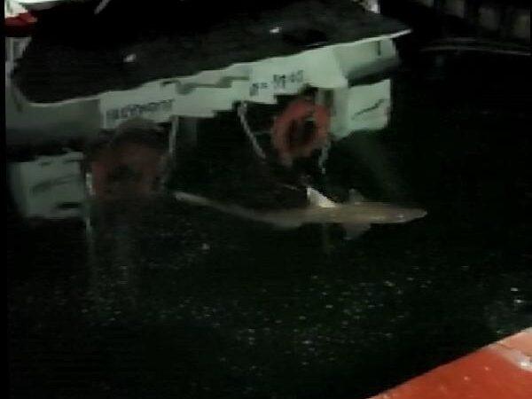 Haliç'te köpek balığı görüldü