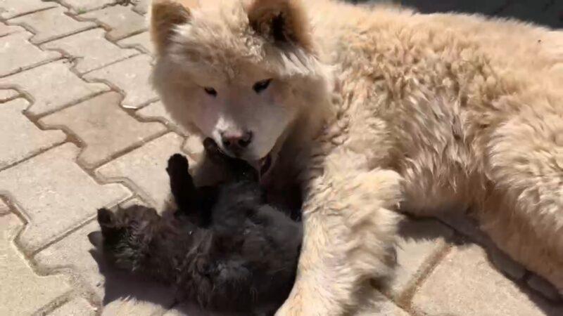 Bursa'da kedi ile köpeğin dostluğu görenleri şaşırtıyor