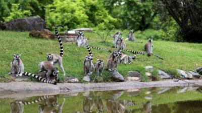 Bursa Hayvanat Bahçesi'nde güzel gelişme! Sayıları 30'a çıktı