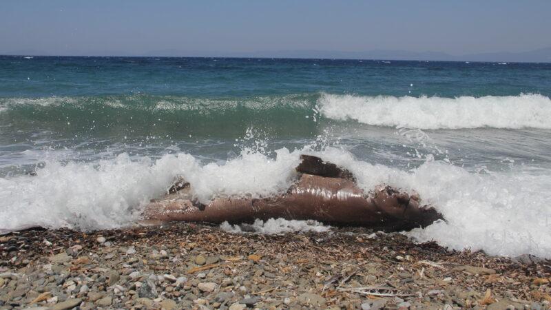 Datça'da sahilde ölü köpekbalığı bulundu