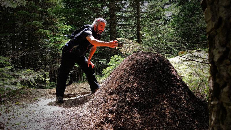 Bursa'da görenler şaşkın! Boyu 1 metreyi buluyor…