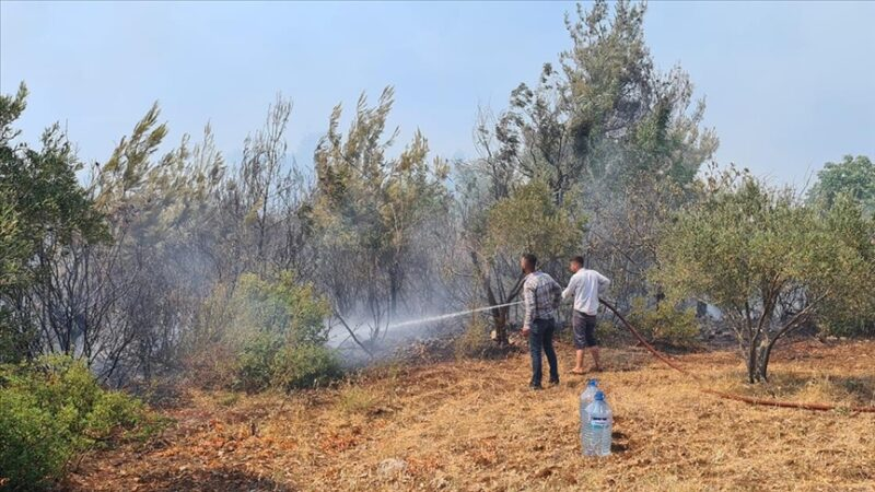 Bir orman yangını da Osmaniye'de