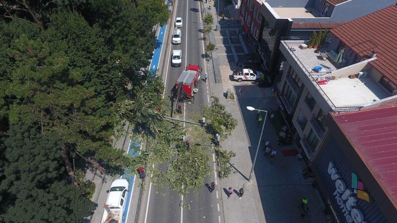 Asırlık ağaç caddeye devrildi