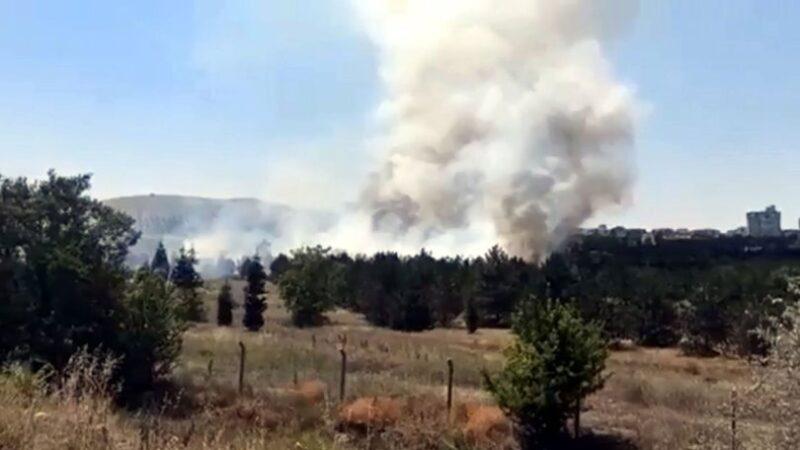 Atatürk Orman Çiftliği arazisinde yangın: 1 gözaltı var