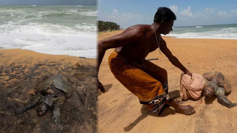 Yüzyılın en kötü çevre felaketlerinden biri! Onlarcası kıyıya vurdu