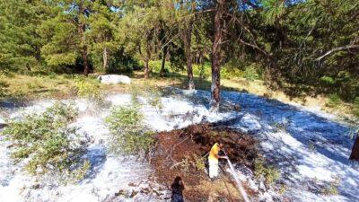 Bursa'da orman yangını! Anında müdahale edildi