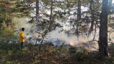 Bursa'da orman yangını! Bakın neden çıktı?