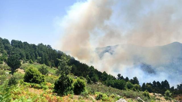 Bir orman yangını da Kütahya'da