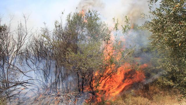 Antalya'dan sonra 4 ilde daha yangın