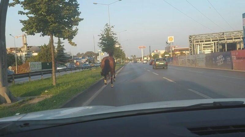 Görüntüler Bursa'dan… Trafikte dört nala