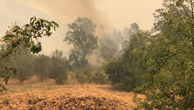 Orman Yangınlarda son durum! 5 ilde alevlerle mücadele