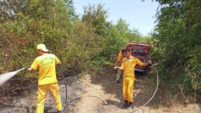 Bursa'da orman yangını paniği!