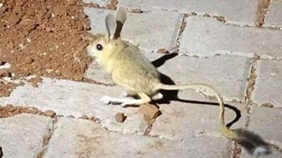 En ilginç 19 hayvandan biri! O ilde görüldü