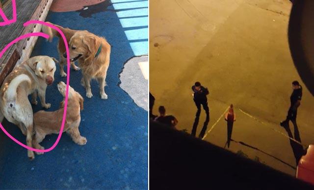 Köpeğe mermi yağdırdı! Seken mermi 10 yaşındaki çocuğa isabet etti