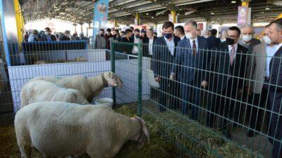 Küçükbaş hayvancılık festivaline coşkulu açılış