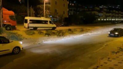 Bursa'da aç kalan domuzlar ilçeye indi