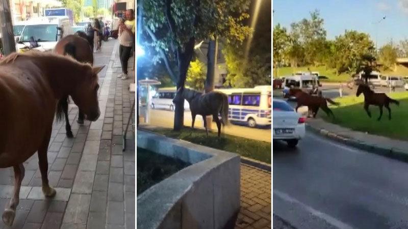 Bursa'da şaşkına çeviren görüntü