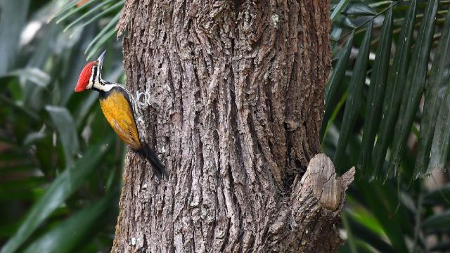 ABD'de 23 canlı türünün soyu tükendi