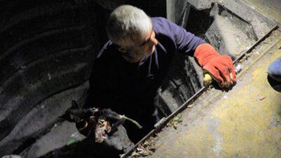 Bursa'da çöpe atılan kediyi belediye kurtardı