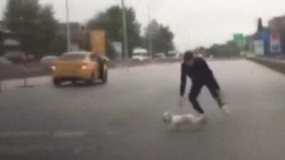 Yavru köpek trafiği birbirine kattı