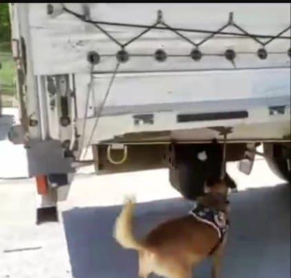 Bursa'da narkotik köpeği buldu! TIR dorsesinde yakalandı