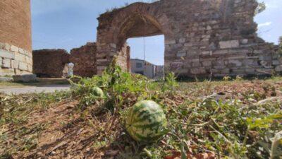 Bursa'da 2 bin yıllık surların içinden çıktı, kimse koparmaya kıyamadı
