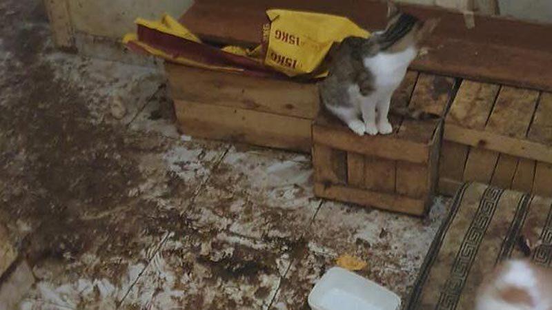Kötü koku şikâyetine gelen polislere kapıyı açmamıştı! Evinden 50 kedi çıktı