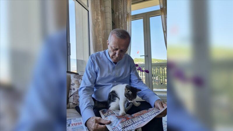 Cumhurbaşkanı Erdoğan torununun kedisiyle fotoğrafını paylaştı