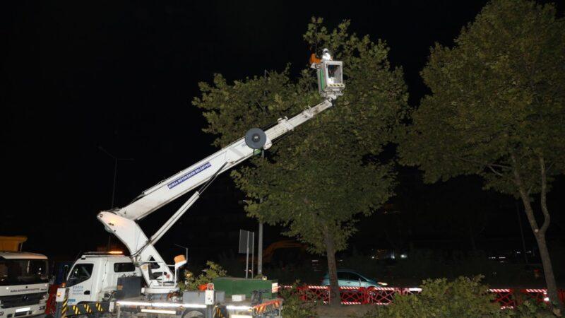 Bursa'da yeni metro hattındaki ağaçlar kesilmek yerine taşındı