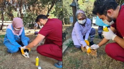 Osmangazi'de villa kedileri parazitlere karşı ilaçlandı