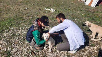 Bursa'da 360 sokak hayvanının aşıları yapıldı
