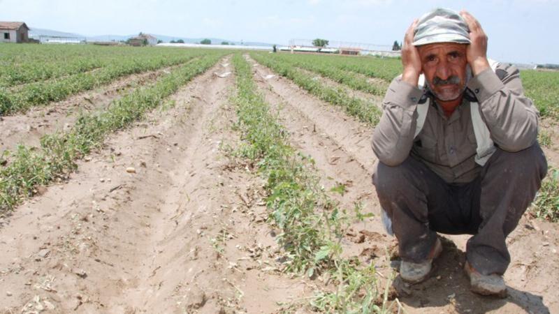 Bursalı çiftçiye 'zam' şoku! 'Toprak bizim ayağımızın altından kayıyor'