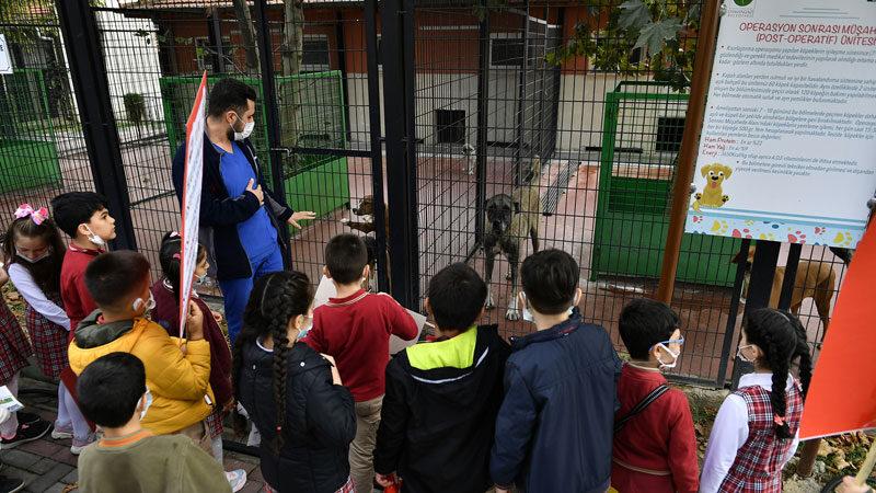 Barınak kapılarını hayvan severlere açtı