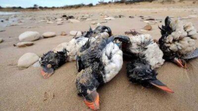 Şoke eden görüntü! Gökyüzünden ölü kuşlar yağdı!