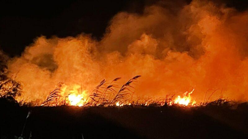 Bursa'da yangın! 20 dönüm alan kül oldu