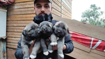 Bursa'da yetiştirip yavrularını 7 bin liradan satıyor