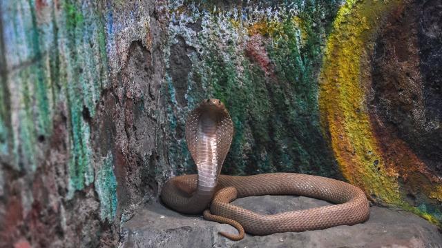 Karısını kobra yılanı ile öldüren adama müebbet hapis verildi